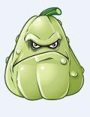 Grumpy Squash